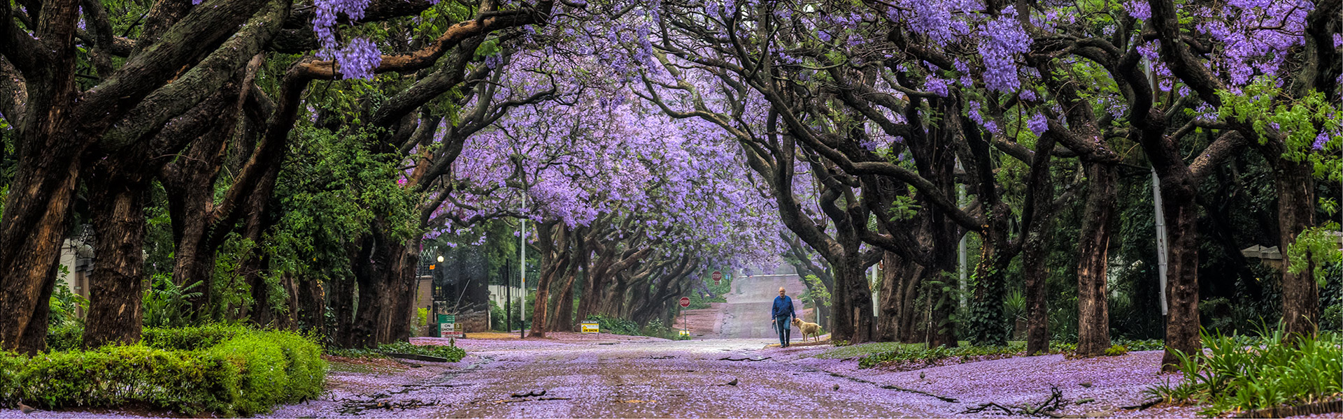 Purple splendour-Danie-Coetzee_slider