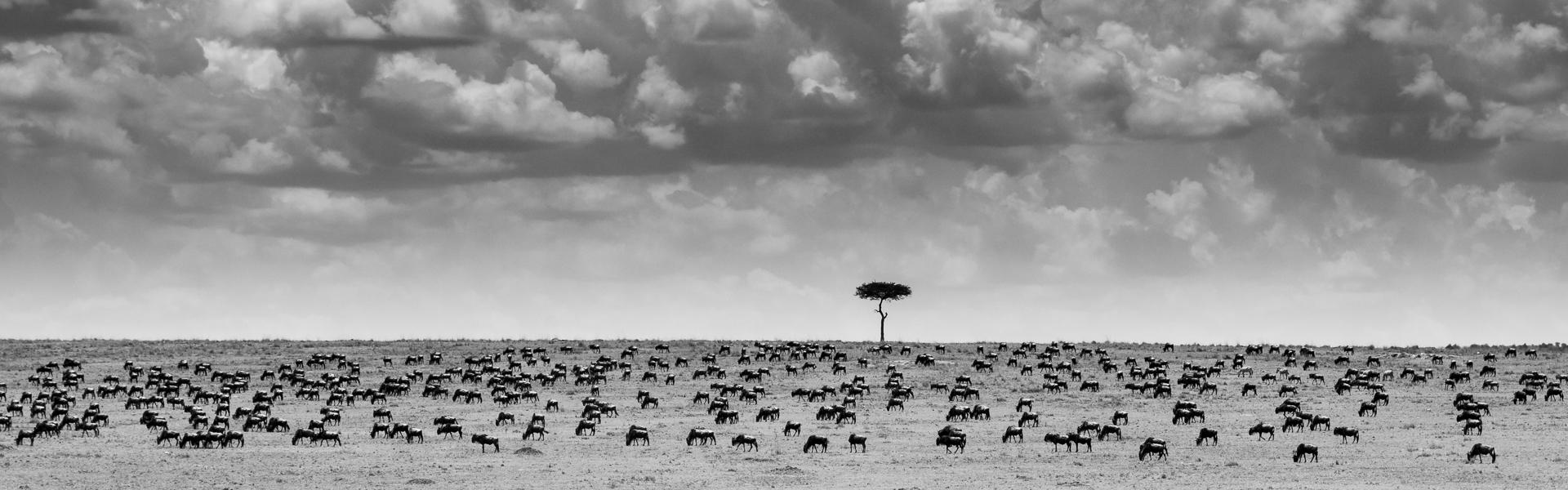 Maasai Skies-Nicholas-Moschides_slider