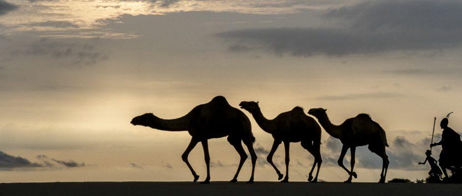Turkana sunrise herdsmen - Roger Trythal